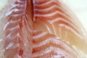 鯛 白身魚 離乳食
