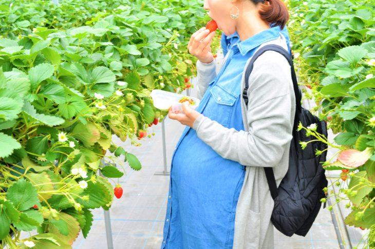 イチゴ狩り 妊婦